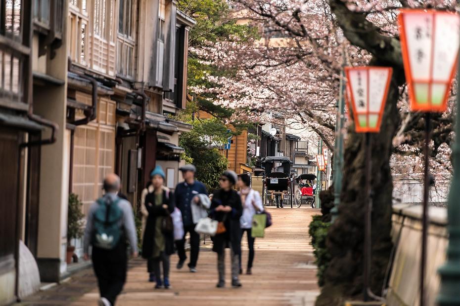 2016.03.31主計町の桜2