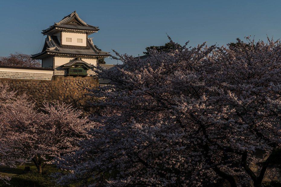 2016.04.02金沢城の桜4