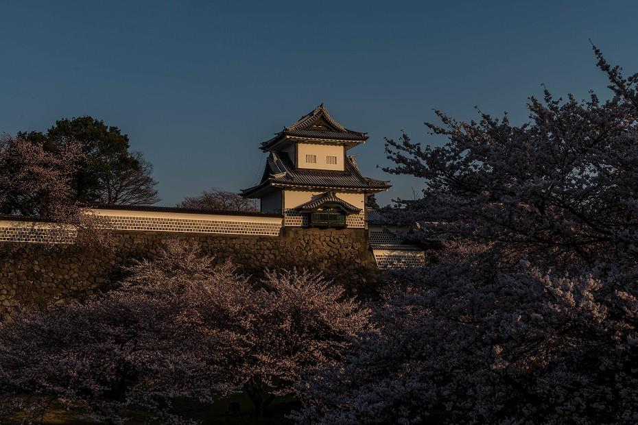 2016.04.02金沢城の桜5