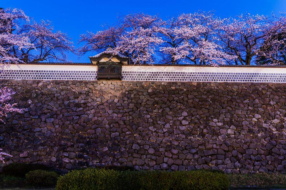2016.04.02金沢城の桜2