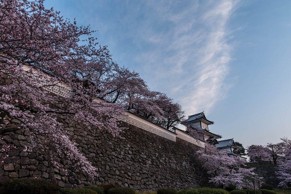 2016.04.02金沢城の桜3