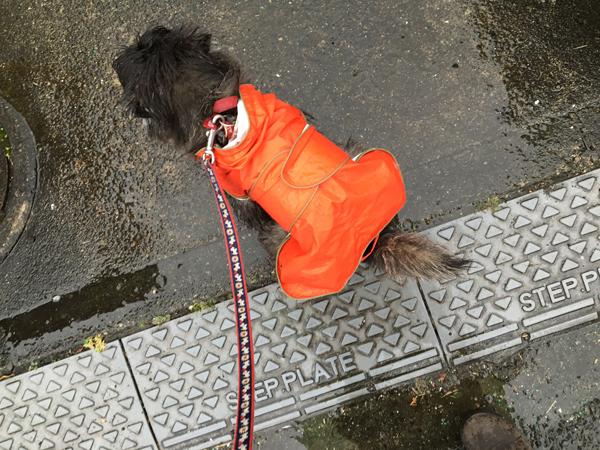 05 雨ルー のコピー