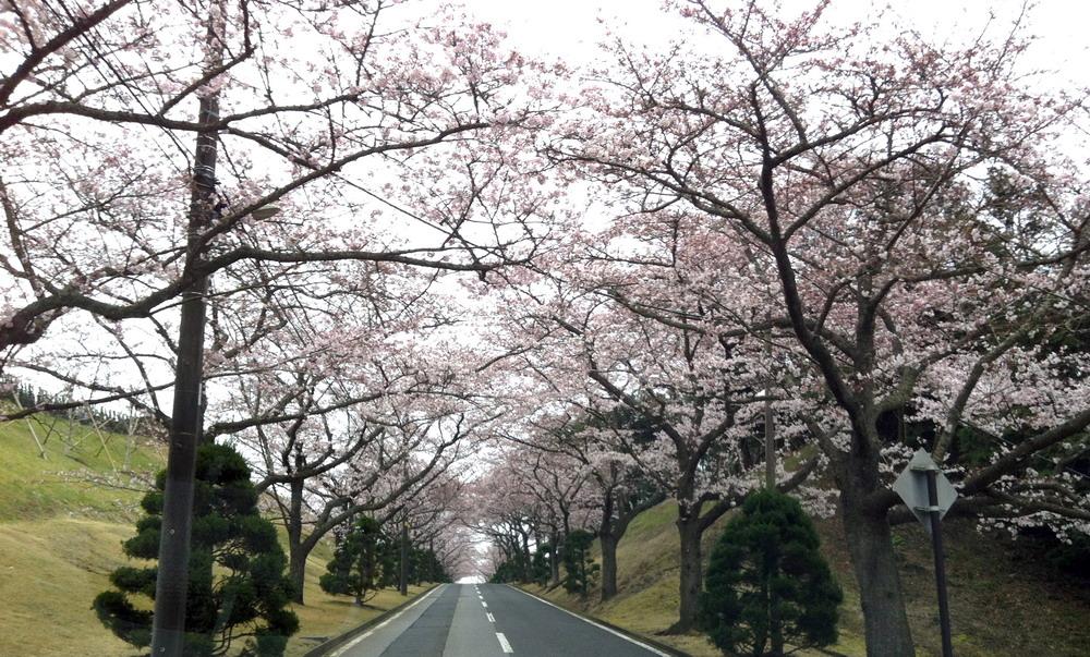 桜2-1000