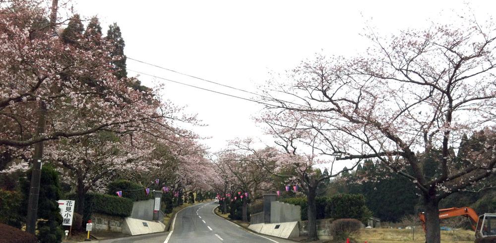 桜1000