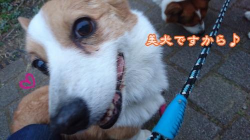 20163美犬