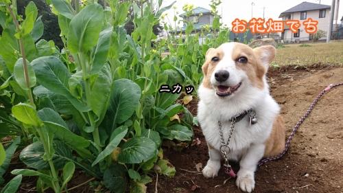 20163お花畑