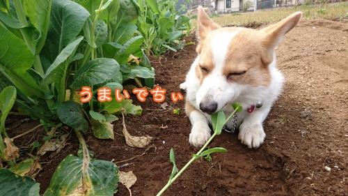 20163お花畑うまいでちぃ