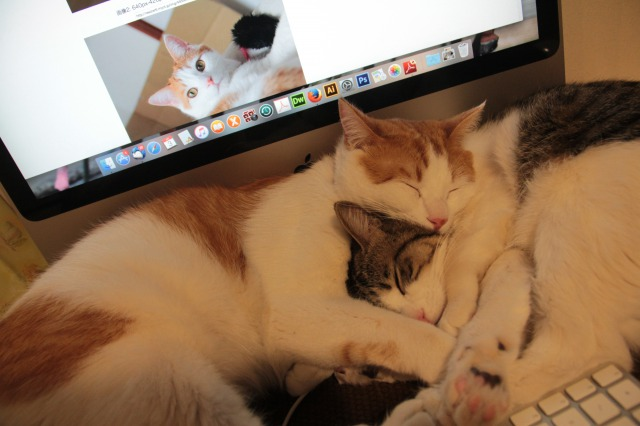 PC邪魔する猫2
