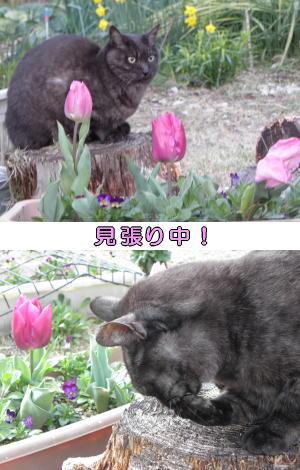猫とチューリップ