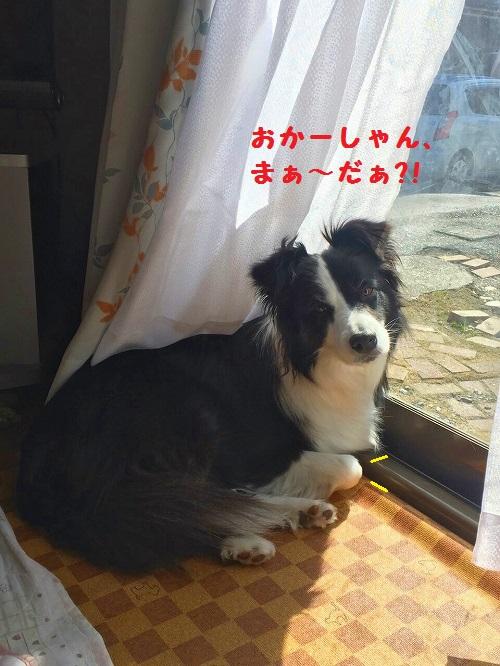 s-_20160219_201019.jpg