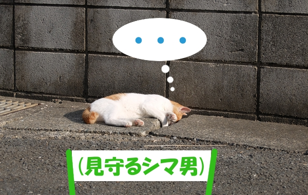 ・・・ (見守るシマ男)