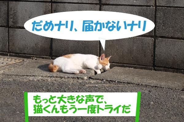だめナリ、届かないナリ 「もっと大きな声で、猫くんもう一度トライだ」