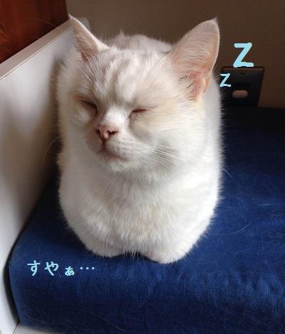 おやすみマシュー