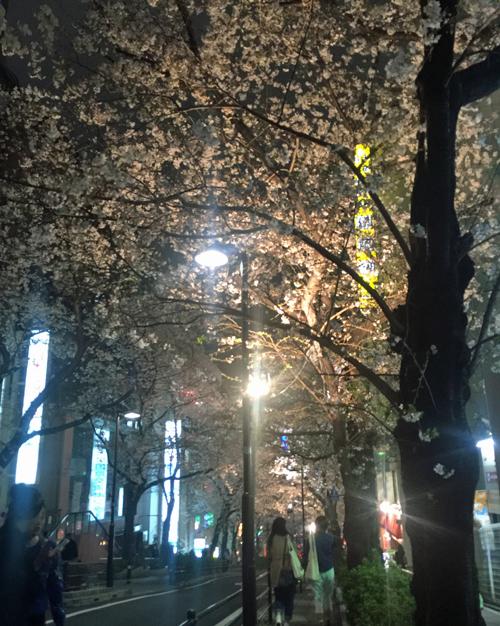 160401_sakura.jpg