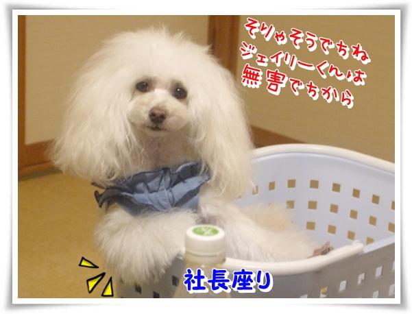 P1140089_1.jpg
