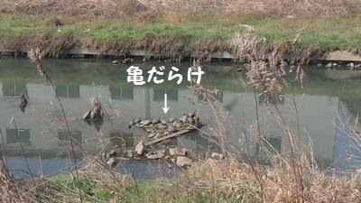 20160305亀