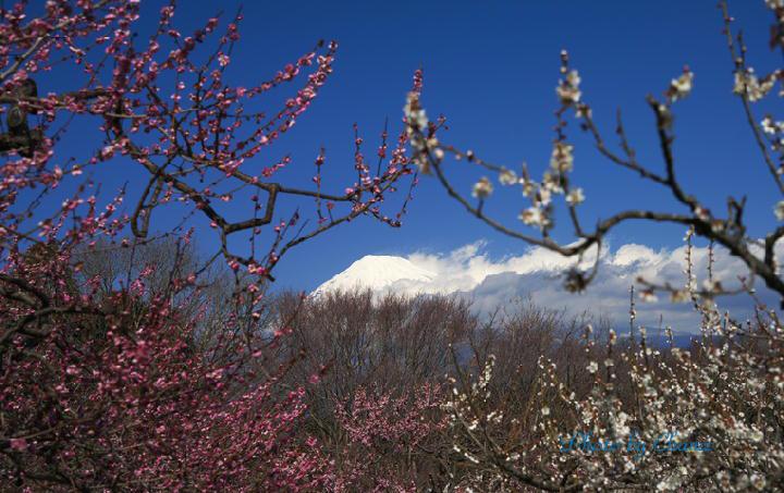 岩本山-414