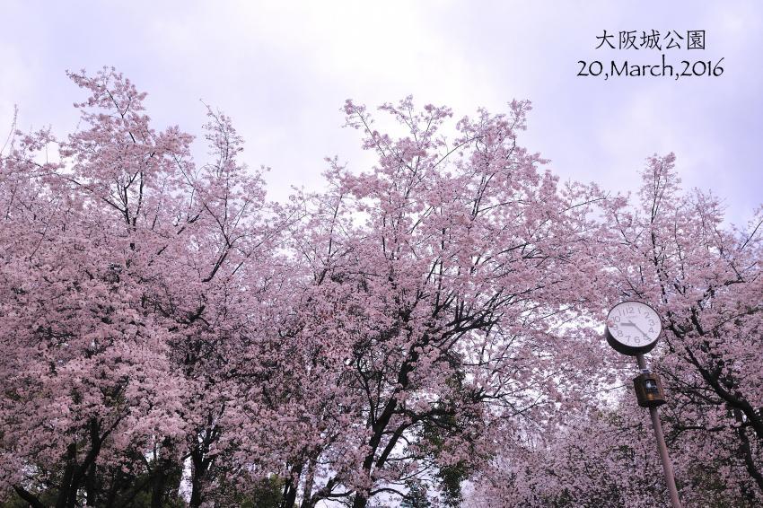 DSC_3174-L_convert_20160323071955.jpg