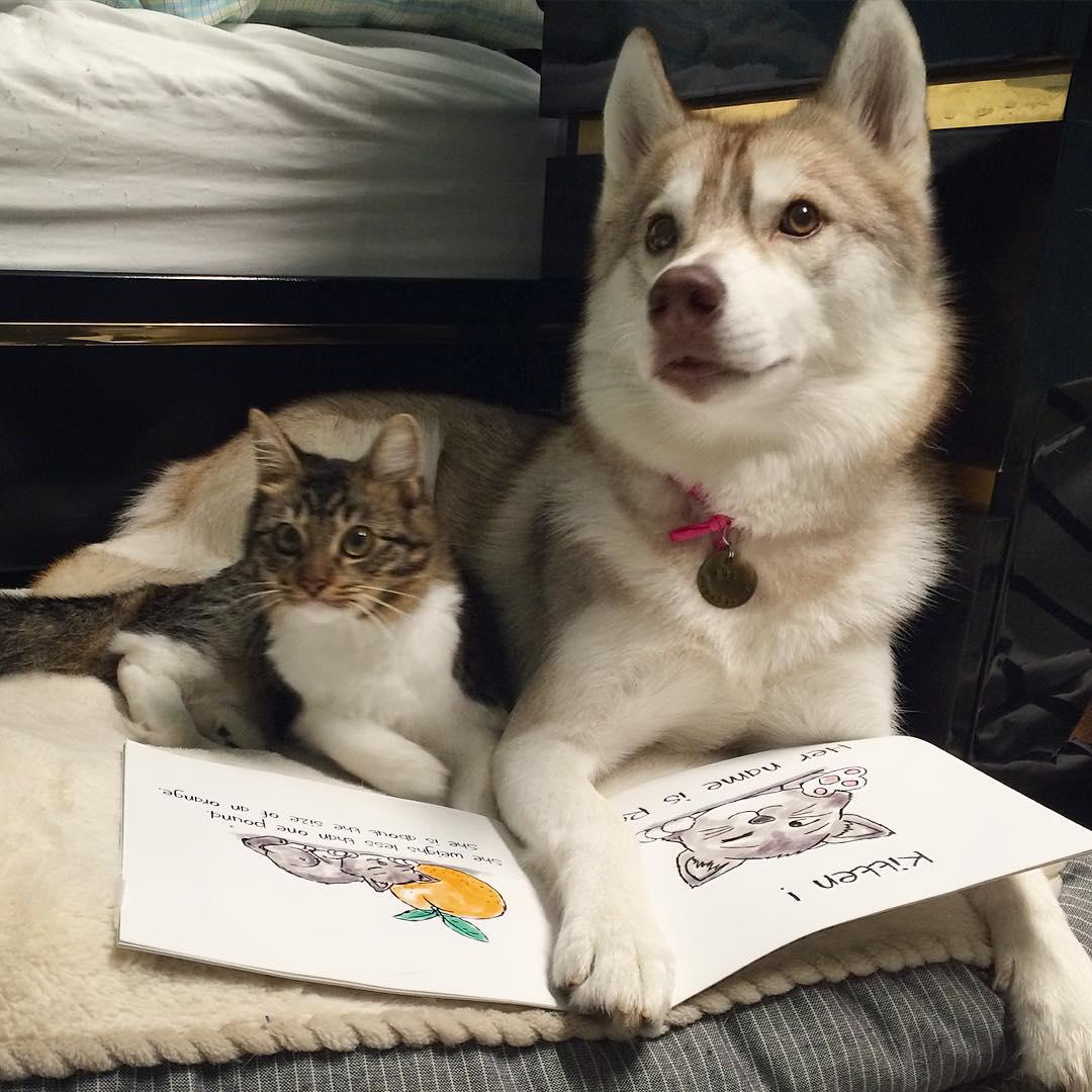 Instagramに投稿された、リロが本を読み聞かせているような写真