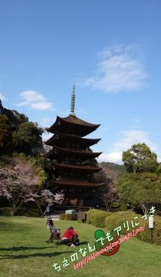 瑠璃光寺 五重塔 桜