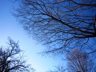 向春の青空