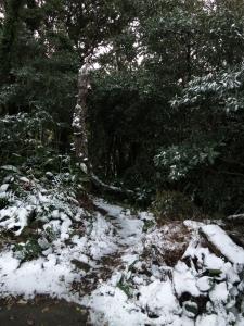 160125-108=雪の裏道入口