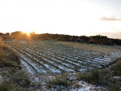 160125-307=雪の畑と朝陽 a庵下農道