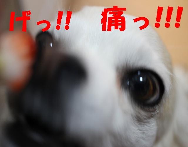 いちご13