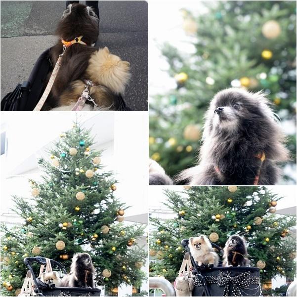 クリスマスガーデンマーケット1 16-01
