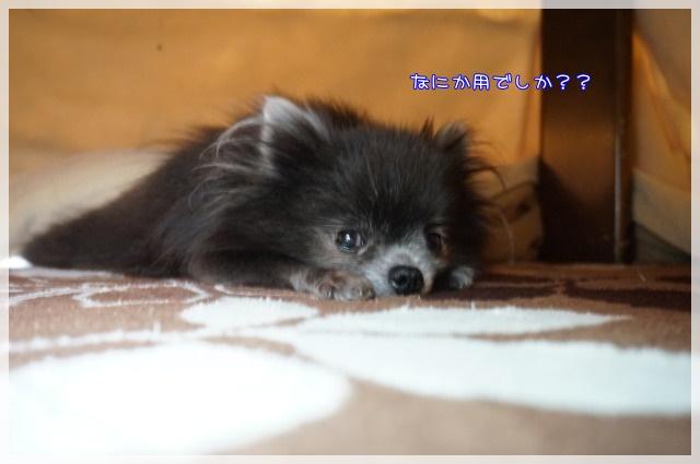 こたつむり3 16-02