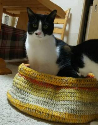 アクリル毛糸 猫用 使用例