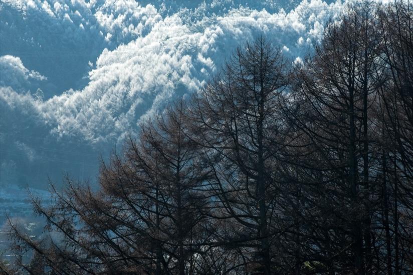 霧氷 塩嶺峠