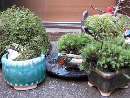 二太2016/03/12-盆栽
