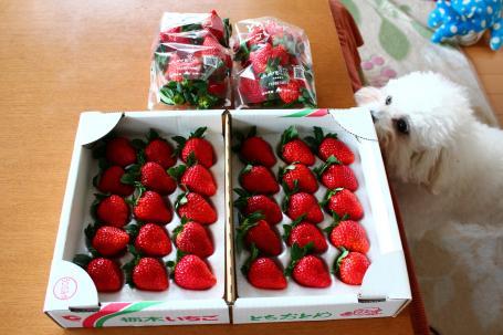 イチゴとララ