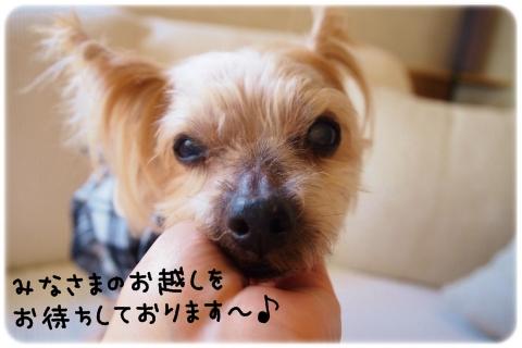 はっち堂コレクション2015 12 (1)