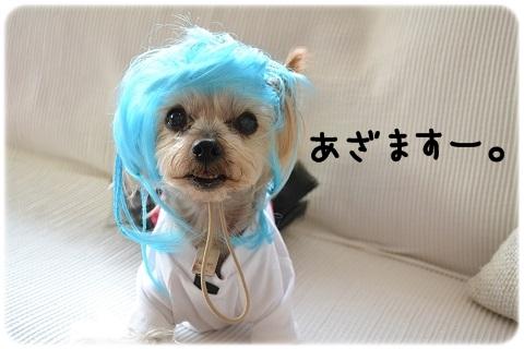 オヅラこっちゃん (3)