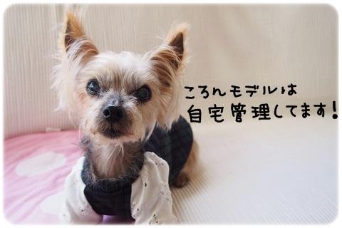 完売御礼 (1)