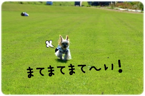 名ストッパー (5)
