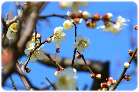 春の気配 (3)