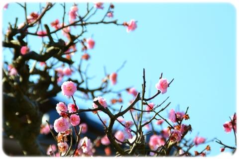 春の気配 (5)
