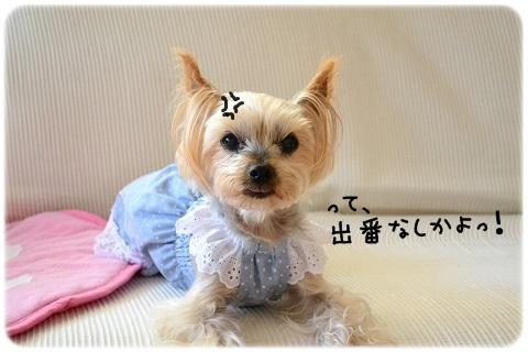 ぼっちさんぽ (1)