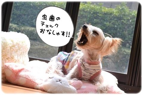 思わず釣られる (6)