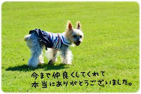 新たなる道 (3)