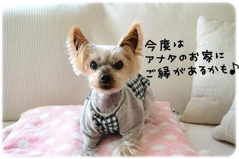 うちのコよろしく (1)