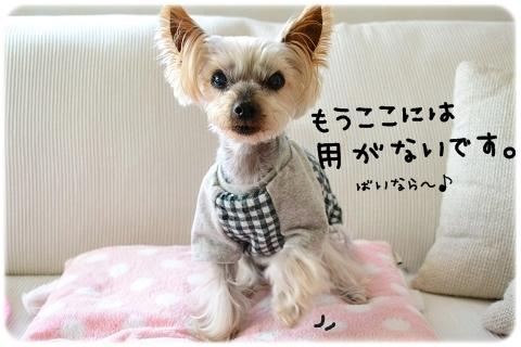 うちのコよろしく (2)