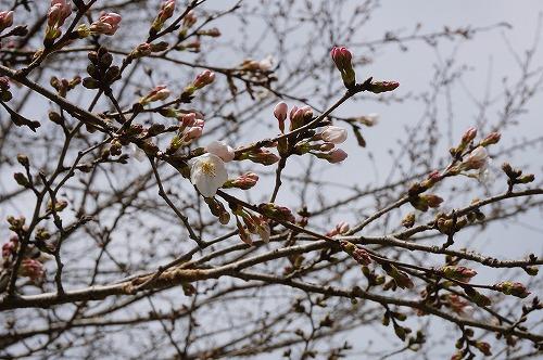 桜イレブン5