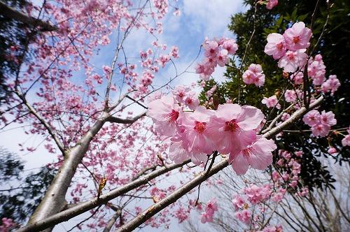 桜イレブン7