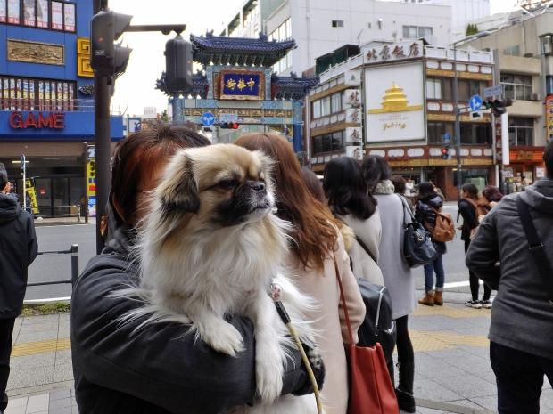 ④a中華街