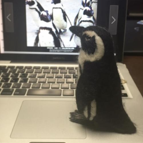 ケープペンギン過程_convert_20160108025842