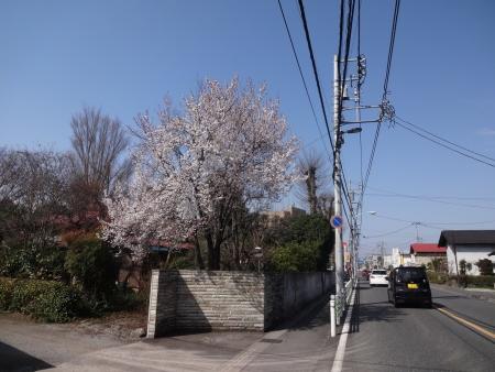025桜が・・・